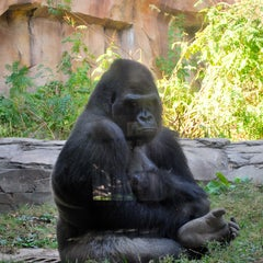 Photo taken at Henry Doorly Zoo and Aquarium by Roy C. on 9/30/2012