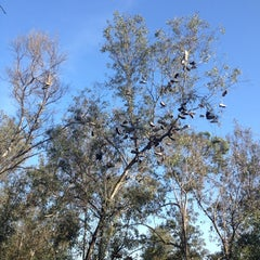 Photo taken at Morley Field Disc Golf Course by Nicholas A. on 12/9/2012