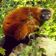 Photo taken at Dublin Zoo by Claire C. on 7/17/2013
