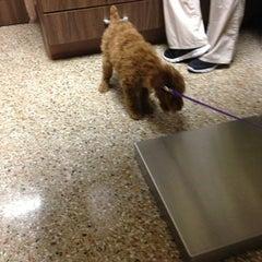 Photo taken at Millburn Veterinary Hospital by Sabrina R. on 1/23/2013