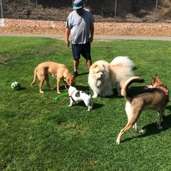 Photo taken at St. Mary's Park Dog Run by Donnie B. on 8/30/2015
