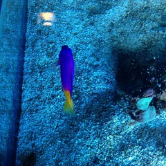 Photo taken at Sharks Underwater Grill by Amanda G. on 12/22/2012