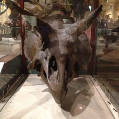 Photo taken at Dinosaurs/Hall of Paleobiology Exhibit by Ryan N. on 10/16/2011