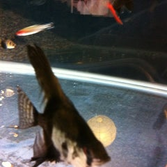 Photo taken at Fish Tank Maintenance Time by Mike ⚽⚽ on 11/25/2012
