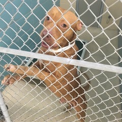Photo taken at Hillsborough County Animal Services by Fabïenne J. on 10/31/2015
