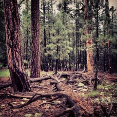 Photo taken at Coconino National Forest by !CE on 8/25/2013
