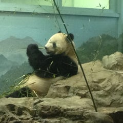 Photo taken at Smithsonian National Zoological Park by janine on 5/30/2013