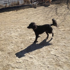 Photo taken at 63rd St Dog Run by Adele S. on 3/4/2013