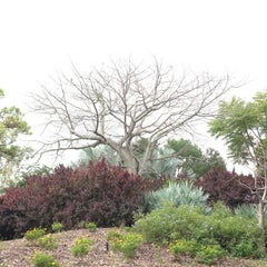 Photo taken at Mounts Botanical Gardens by Bridget R. on 1/5/2013