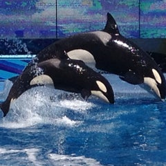 Photo taken at SeaWorld Orlando by André G. on 2/19/2013