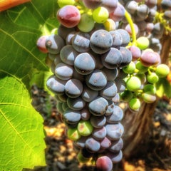 Photo taken at David Fulton Winery by Peter S. on 7/18/2014