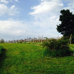 Photo taken at Wilson Winery by Loretta H. on 6/4/2014