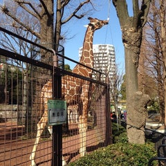 Photo taken at 上野動物園 キリン舎 by Bevis L. on 1/28/2014