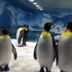 Photo taken at Sea World by Marcio T. on 12/1/2012