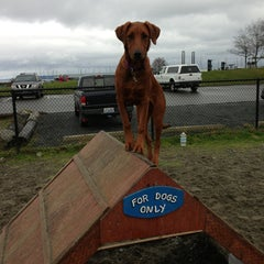 Photo taken at Edmonds Off-Leash Dog Park by Jeremy L. on 1/26/2013