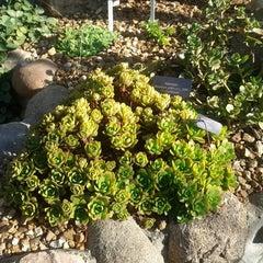 Photo taken at Matthaei Botanical Gardens by Yihua G. on 10/27/2012