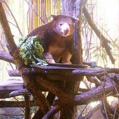Photo taken at Dallas World Aquarium by Jeighsen ®. on 10/8/2012