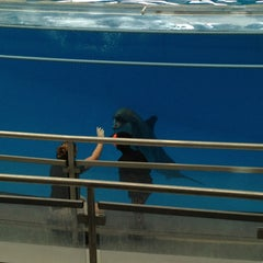 Photo taken at Dolphin Show by Ezgi Y. on 2/26/2013