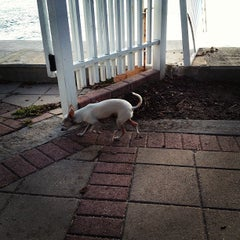 Photo taken at Dog Park for The Waverly & The Flamingo by Alex M. on 1/22/2013