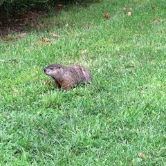 Photo taken at Conference House Park by Lucy W. on 8/8/2013