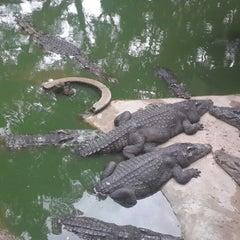 Photo taken at The Million Years Stone Park & Pattaya Crocodile Farm (อุทยานหินล้านปีและฟาร์มจระเข้พัทยา) by Mustafa M. on 6/16/2013