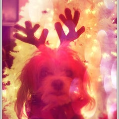 Photo taken at Poinsettia Park Dog Area by Kristen K. on 12/29/2011