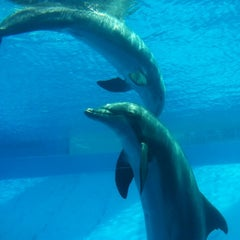 Photo taken at Texas State Aquarium by Wanda I. on 7/15/2012