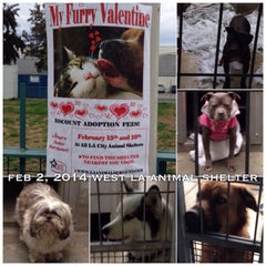Photo taken at West LA Animal Shelter by 💕i /@yumyum.in.the.tumtum on 2/3/2014