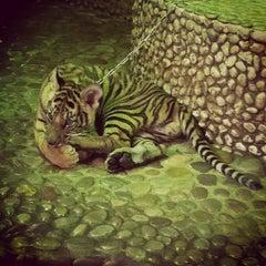 Photo taken at The Million Years Stone Park & Pattaya Crocodile Farm (อุทยานหินล้านปีและฟาร์มจระเข้พัทยา) by Mishka V. on 2/5/2013