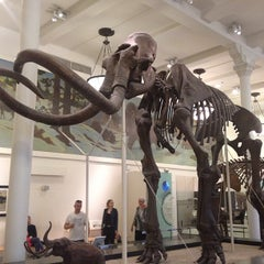 Photo taken at American Museum of Natural History by Rick D. on 5/17/2013