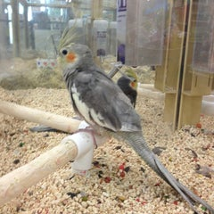 Photo taken at Pet Supermarket by PVG on 1/20/2013