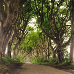 Photo taken at The Dark Hedges by dal on 5/28/2015