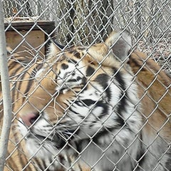 Photo taken at Exotic Feline Rescue Center by Maggie M. on 11/23/2012