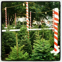 Photo taken at Clancy's Christmas Trees by Lia on 12/16/2012