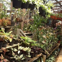 Photo taken at Pasar Burung Kota Malang by Maulien Khairina S. on 10/25/2012