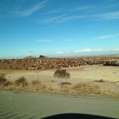 Photo taken at Harris Ranch Cattle Yards by Jackie C. on 1/31/2014