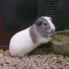 Photo taken at PetSmart by Dj C. on 11/7/2012