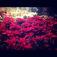 Foto tomada en Mercado de Plantas y Flores  Madreselva por Aura el 11/25/2012