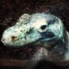 Photo taken at Colchester Zoo by Rowland W. on 1/3/2013