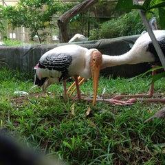 Photo taken at Trivandrum Zoo by Nikhil M. on 5/11/2014