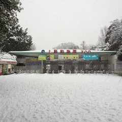 Photo taken at 上野動物園 (Ueno Zoo) by わんほー on 1/14/2013