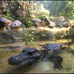 Photo taken at Bioparco by Yaroslav S. on 11/15/2012