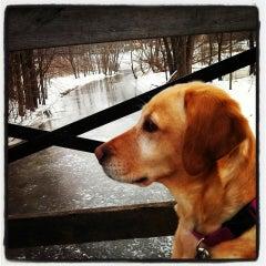Photo taken at Bassett Creek Dog Park by Dana E. on 3/19/2013