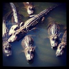 Photo taken at Gatorland by twobillionideas on 10/21/2012