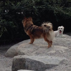 Photo taken at Emery Barnes (Dog Park) by Fabio R. on 8/11/2014