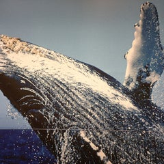 Photo taken at Pacific Whale Foundation by Igor R. on 4/24/2013