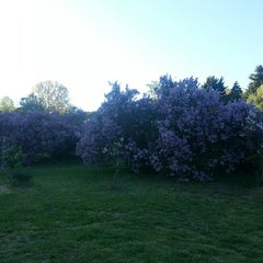 Photo taken at Highland Park Lilacs by johan h. on 5/16/2013