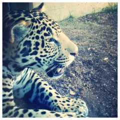 Photo taken at San Diego Zoo by Taeler S. on 6/25/2013