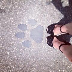 Das Foto wurde bei Page Museum at the La Brea Tar Pits von Anna U. am 5/16/2013 aufgenommen
