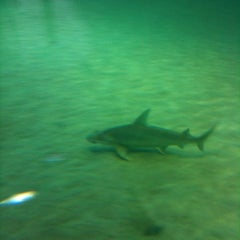 Photo taken at Gumbo Limbo Nature Center by Brian B. on 7/7/2012